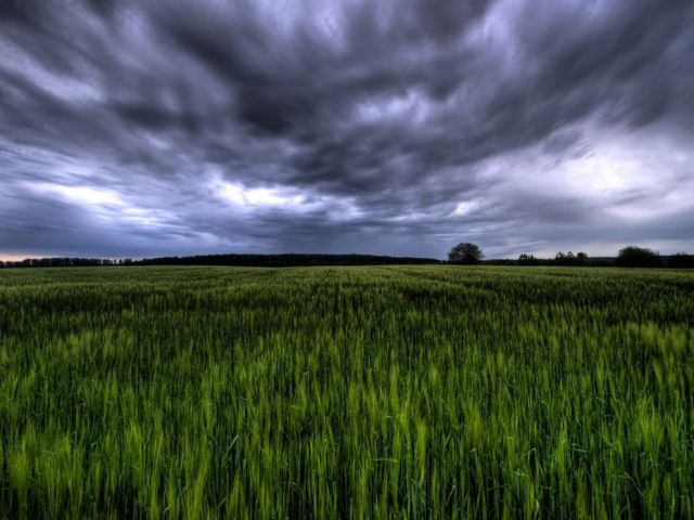 green-field-germany_18737_990x742