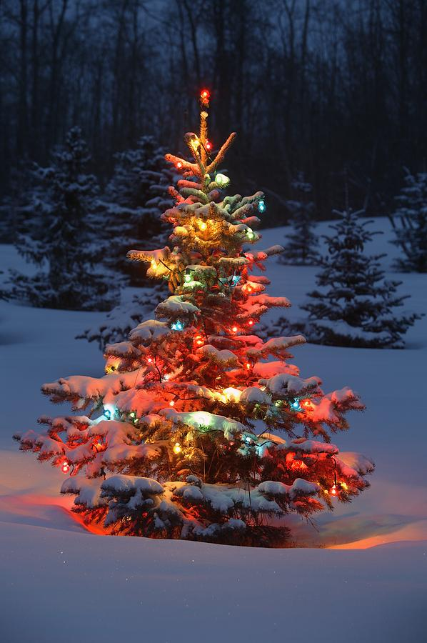 christmas-tree-with-lights-outdoors-in-carson-ganci