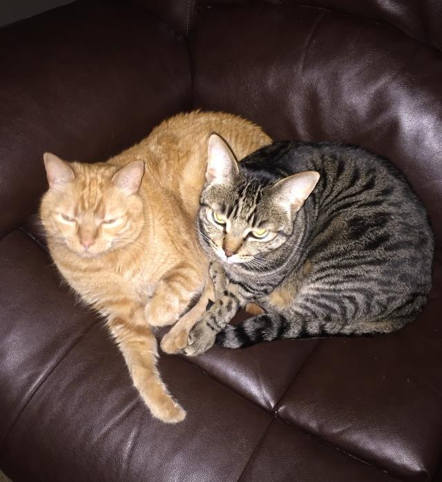 Plump cats