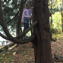 abby in the tree