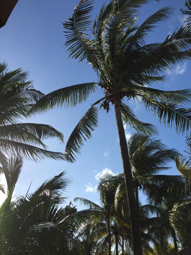 palm tree in wind