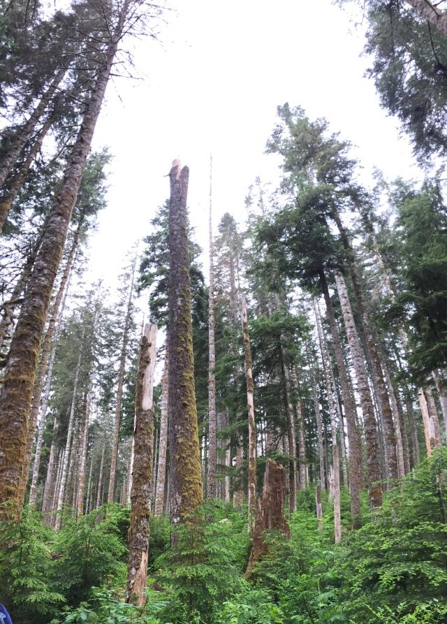trees praising